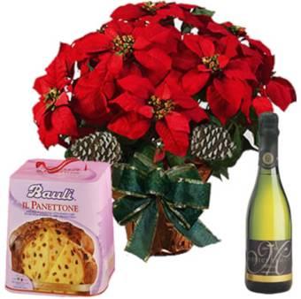 Stella di Natale grande con PANDORO/PANETTONE e bottiglia di spumante