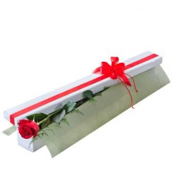 Una Rosa per San Valentino