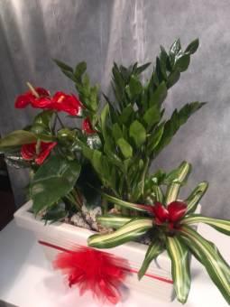 Composizione rettangolare piante fiorite