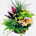 gruppo di piante