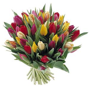 Bouquet tulipani