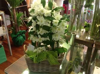 Spedire fiori milano fiori a domicilio milano le for Costo orchidea