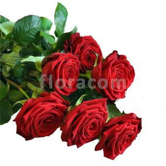Mazzo di 6 rose rosse a stelo lungo.