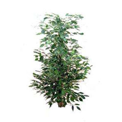 pianta da appartamento  n2