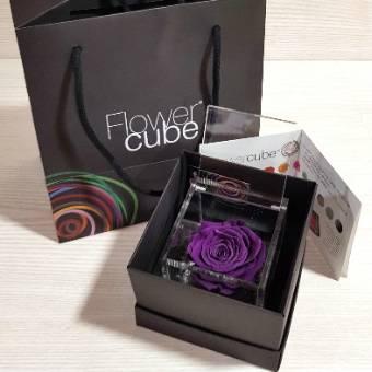 Flowercube 8x8cm rosa VIOLA