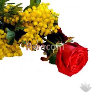 Rosa rossa con mimosa