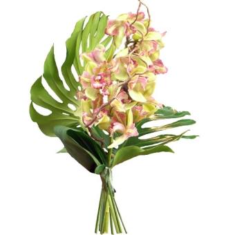 orchidea cimbidium recisa