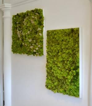 Quadri e Pareti Vegetali di Lichene Nordico