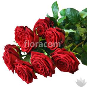 Mazzo di 8 rose rosse a gambo lungo.