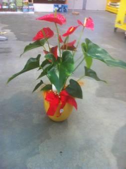 Vendita online fiori pordenone consegna fiori pordenone for Anthurium rosso