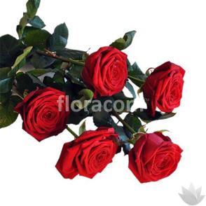 Mazzo di 5 rose rosse a stelo lungo.