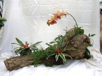 composizione piante