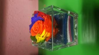 Rosa eterna arcobaleno