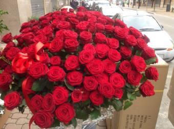 rose rosse cm 80