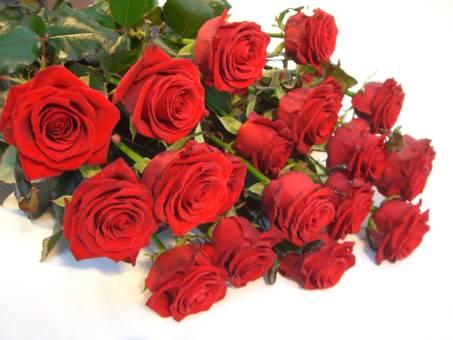 Mazzo di 18 rose rosse a stelo lungo.