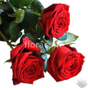 Mazzo di n. 3 rose rosse a stelo lungo.