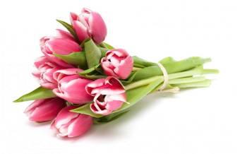 bouquet di 8 tulipani