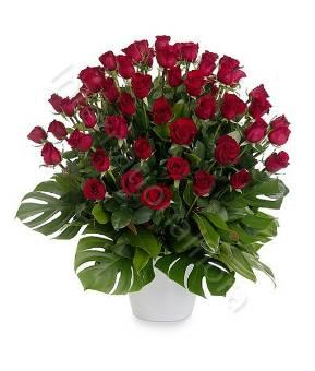 51 rose rosse