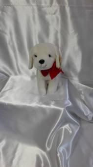 cane bianco con ciondolo