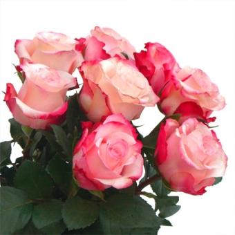 fascio di rose a gambo lungo