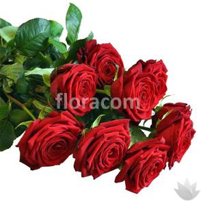 Mazzo di n. 6 Rose rosse a stelo lungo.