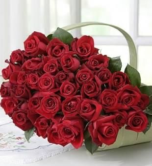 500 Rose Rosse