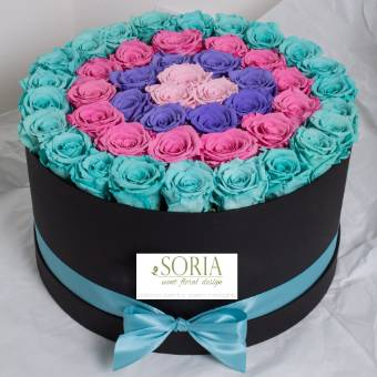 box 70 rose multicolor