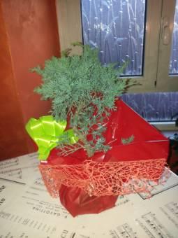 bonsai di ginepro