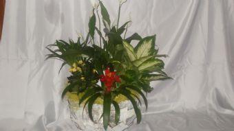 cesto in cortecci con  piante verdi e fio