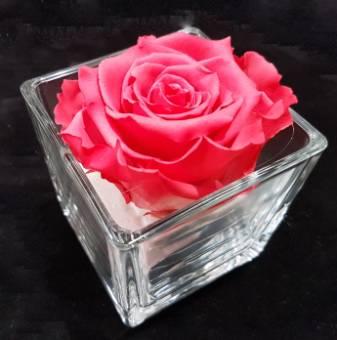 rosa stabilizzata in vetro