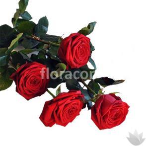 Mazzo di n. 4 Rose rosse a stelo lungo.