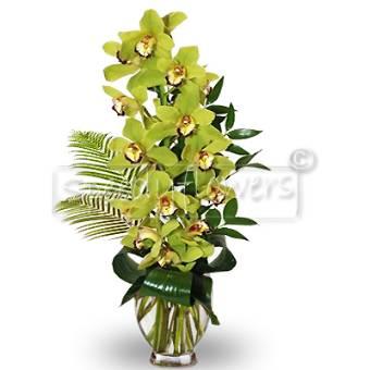 tralcio di orchidea