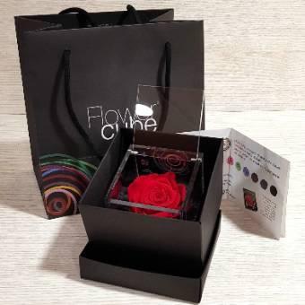 FlowerCube 8x8cm Rosa ROSSA