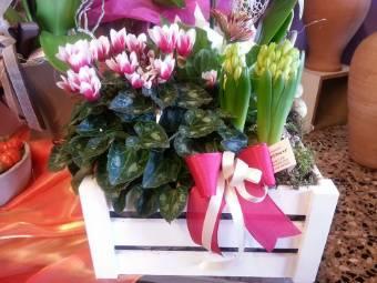 Cassettina in legno con piante miste di stagione
