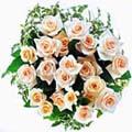 roselline rosa.o vari colori