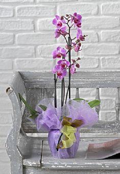 Consegna fiori roma fiori a domicilio roma le fiorerie - Come curare un orchidea in casa ...