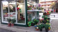 Cuore di fiori Fiorentini B.