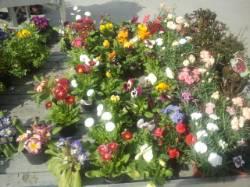 Naturalmente piante e fiori s.n.c.
